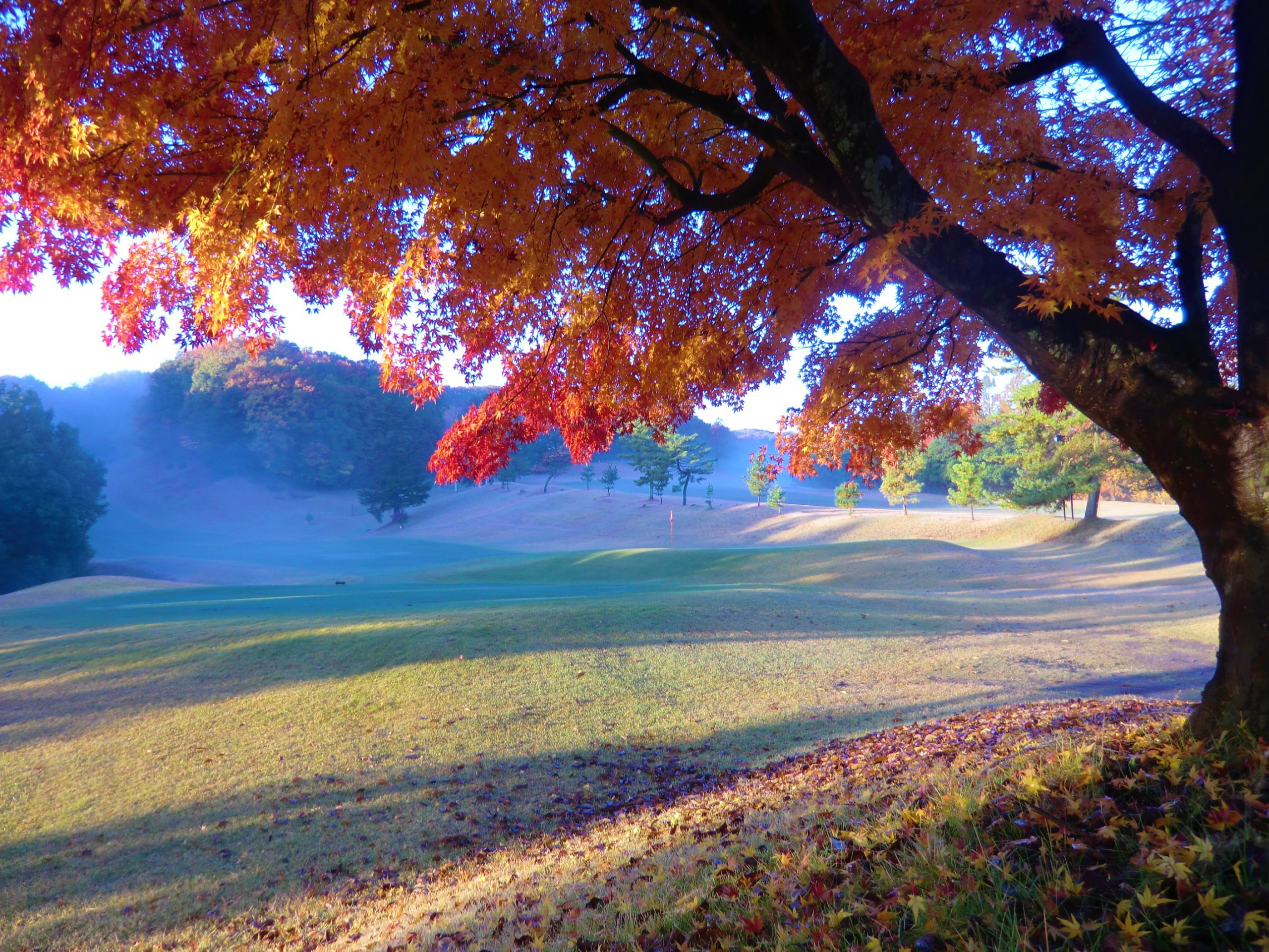 秋の祝日特別料金のお知らせ